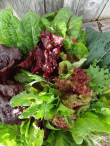 Susie's Super Salad Greens